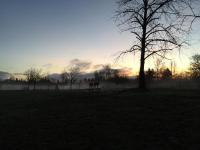 SunriseCoyotes.jpg