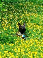 darmok in buttercups.jpg