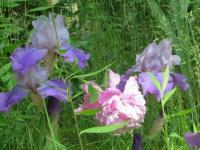 purplenpink.jpg