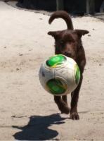 Soccer Ball 1.jpg