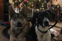 the kids at Christmas.jpg
