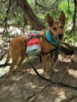 06-20 Dinosaur Valley ST Park, TX Hike (18).jpg