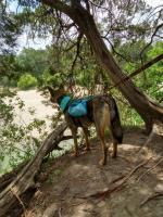 06-20 Dinosaur Valley ST Park, TX Hike (17).jpg