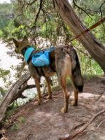 06-20 Dinosaur Valley ST Park, TX Hike (21).jpg
