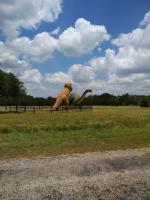 06-20 Dinosaur Valley ST Park, TX (16).jpg
