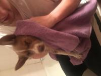 Kaya_firstbath2 (600x800).jpg