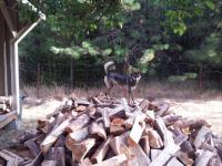 Dog wood.jpg
