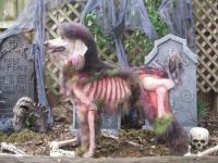 zombiepoodle.jpg