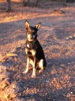 lee parkers pup IMG_3485.jpg