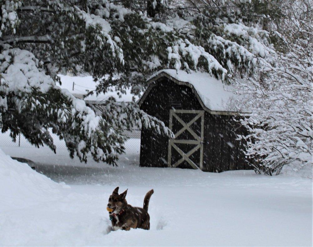 dog snow 2 (2).JPG